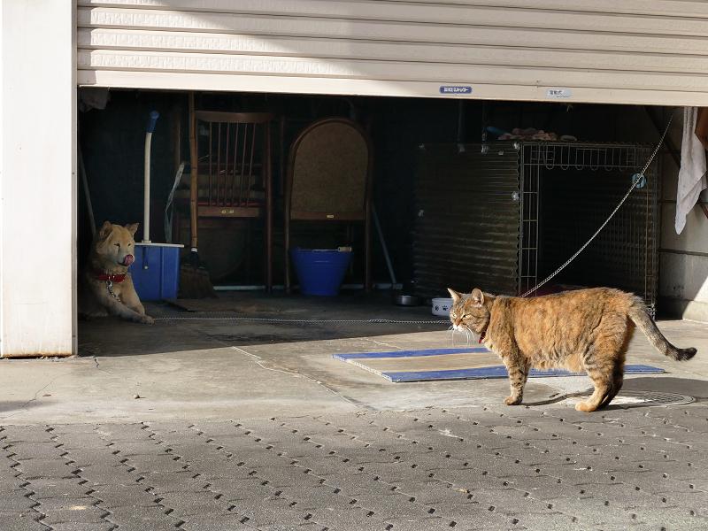 犬とサビ柄猫2