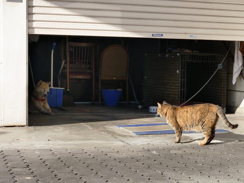 犬とサビ柄猫3