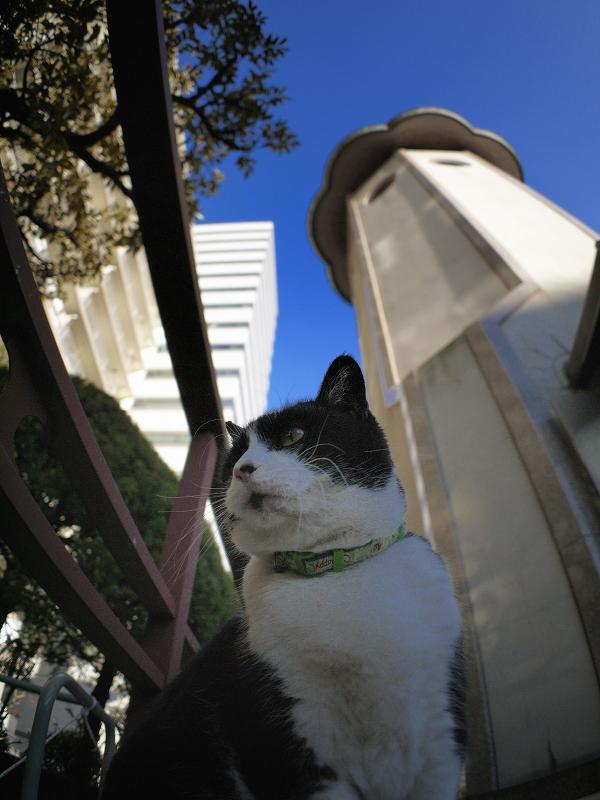 塔の下の黒白猫
