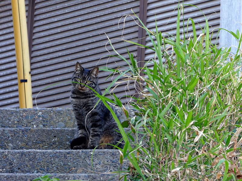 階段上の娘キジトラ猫1