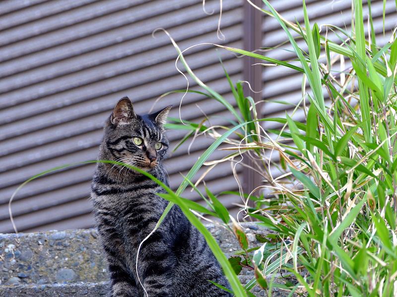 階段上の娘キジトラ猫2