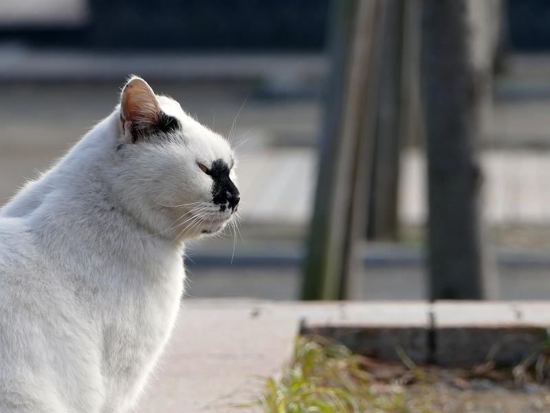 公園の鼻ブチ柄猫