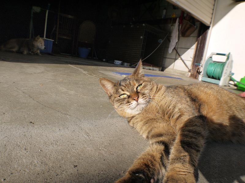 ガレージ前のサビ柄猫1