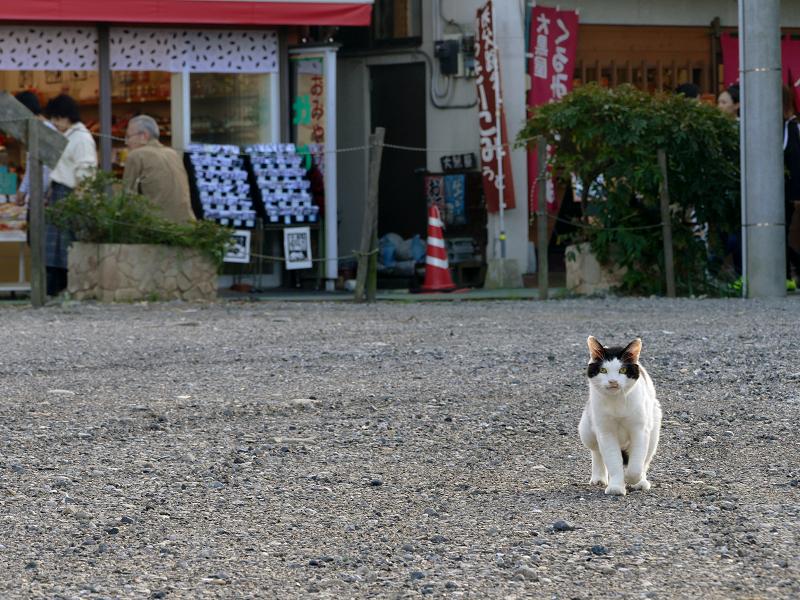 空き地を歩いてくる白黒猫1