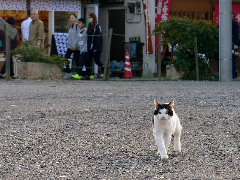 空き地を歩いてくる白黒猫2