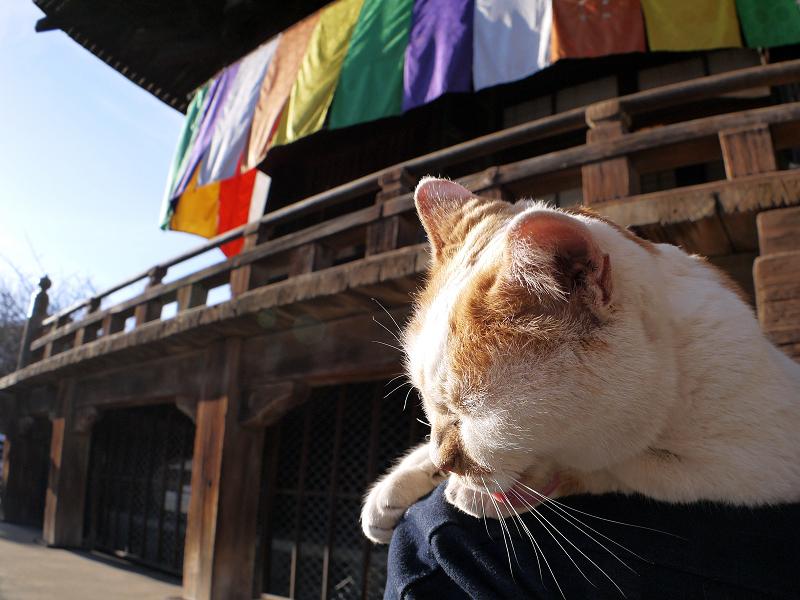 本堂の横で膝に乗った茶白猫1