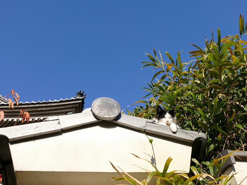 青空と軒瓦と黒白猫1