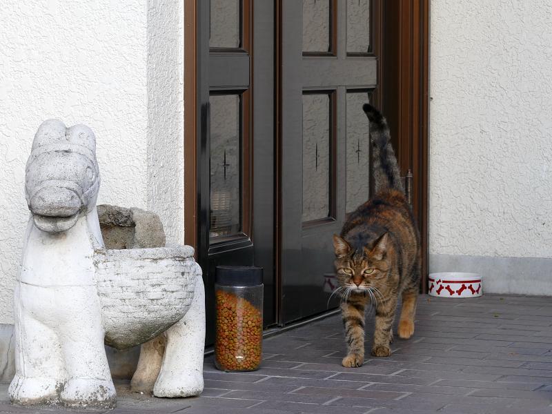 玄関から歩いてくるサビ柄猫2