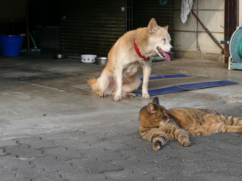 ガレージから出てきた犬とサビ柄猫