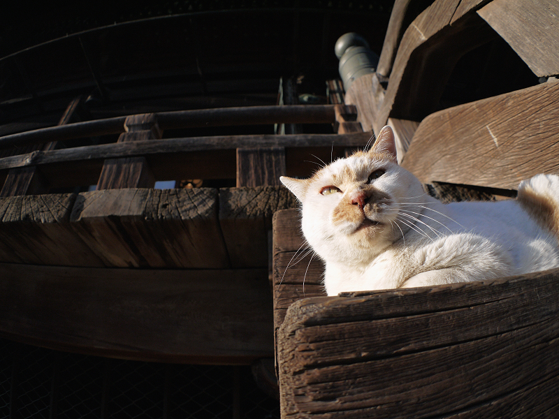 階段で腹ばってる茶白猫2
