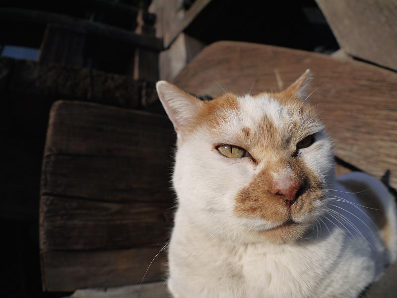 階段で腹ばってる茶白猫3