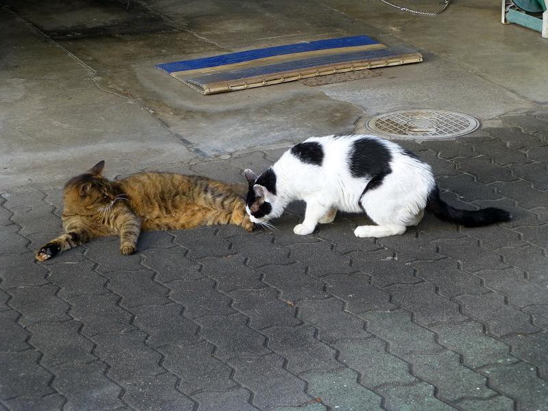 サビ柄猫の足を嗅ぐ白黒猫1