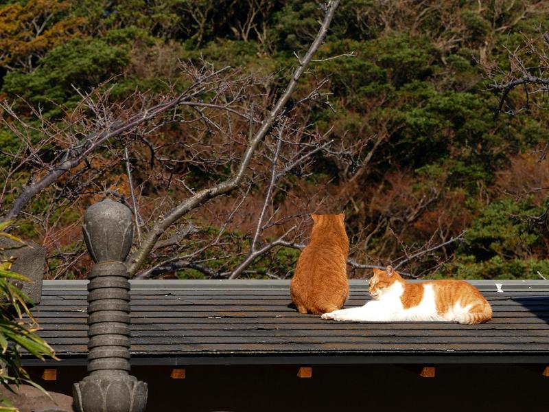 石柱と茶系の猫