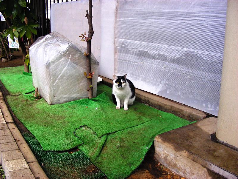 高架下の黒白猫1