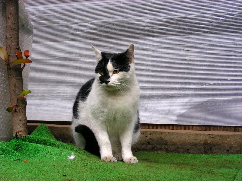 高架下の黒白猫2