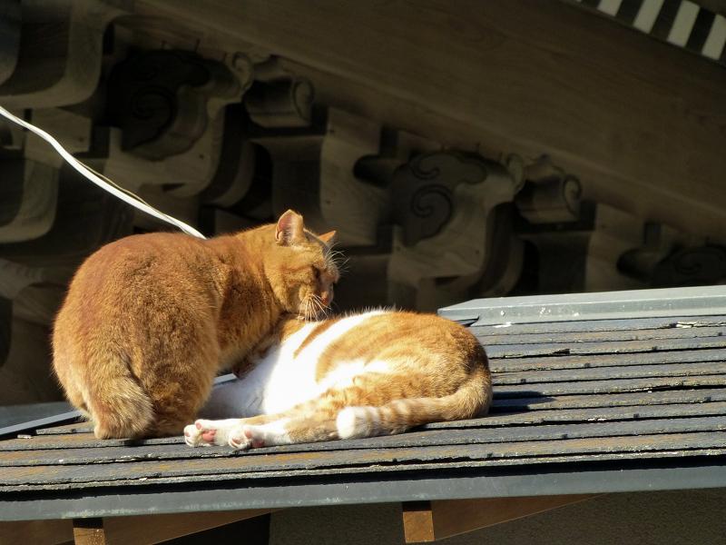 仲良しな屋根上の茶系の猫2