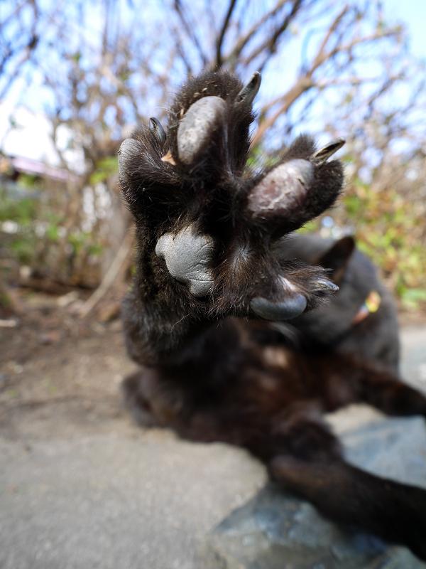 茂みの前で足の指を広げた黒猫2