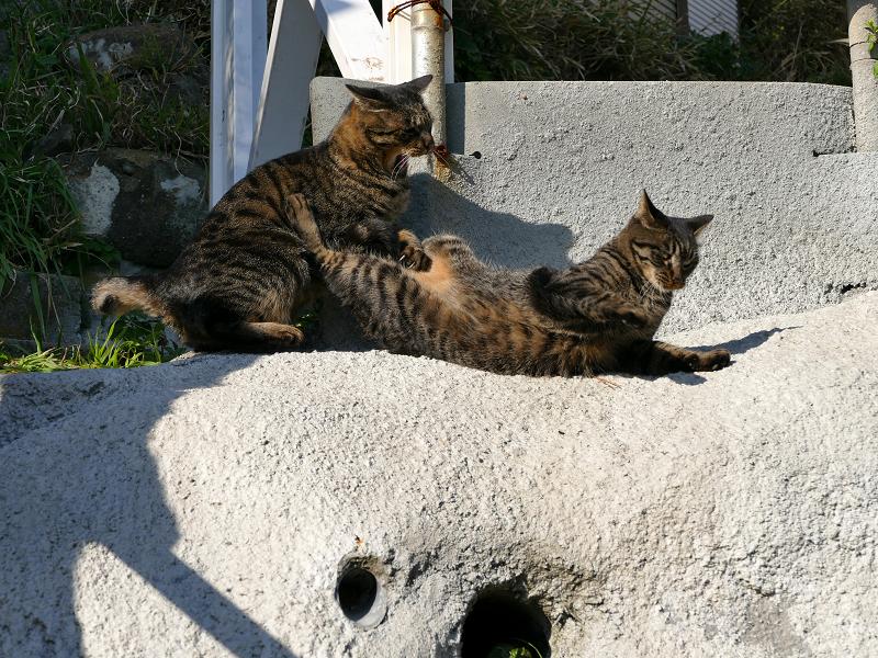 壁際で掴み合いの母娘キジトラ猫2