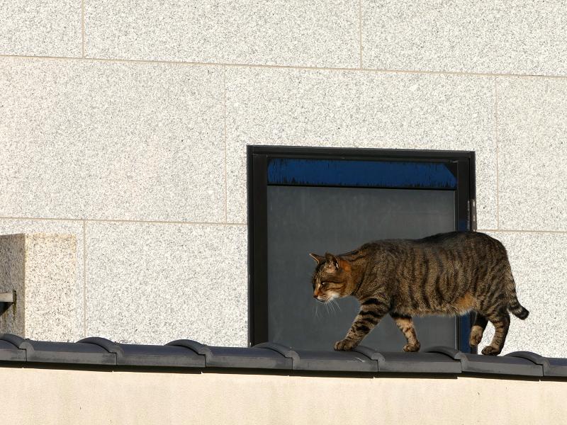 塀の上を行き来する猫たち1