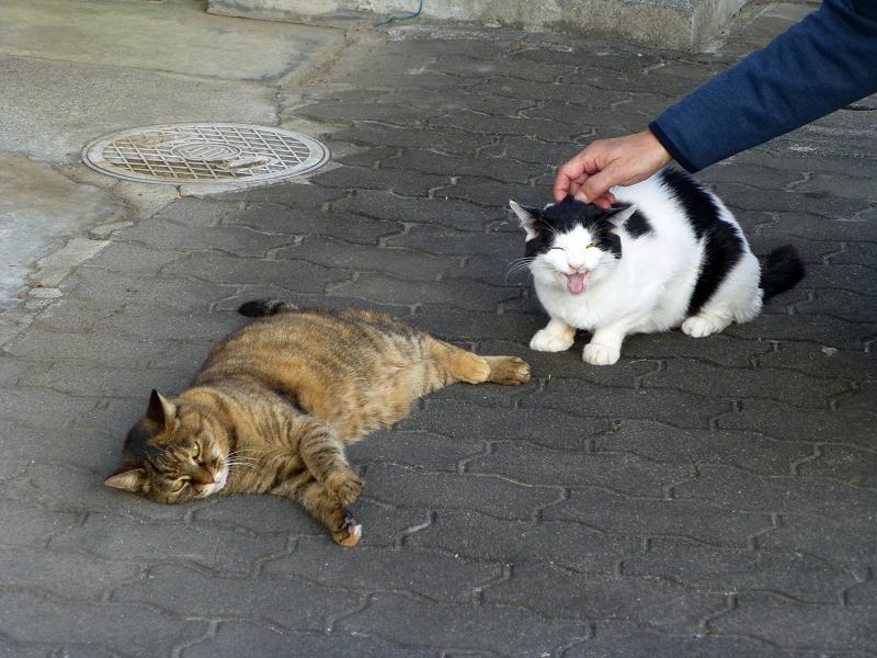 ガレージ前のサビ柄猫と白黒猫2