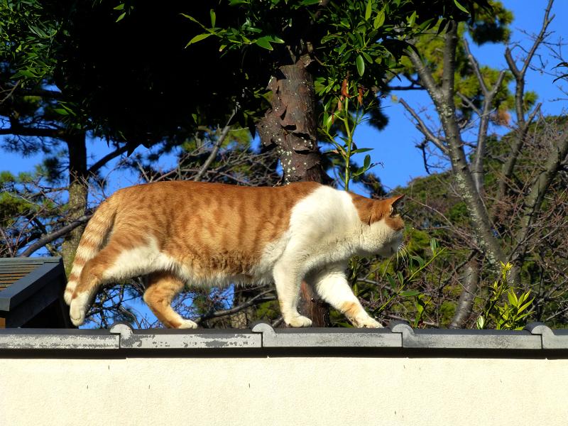 塀の上を行き来する猫たち2