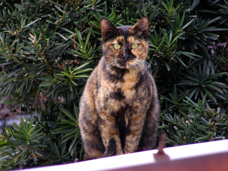 ガレージ屋根のサビ柄猫2