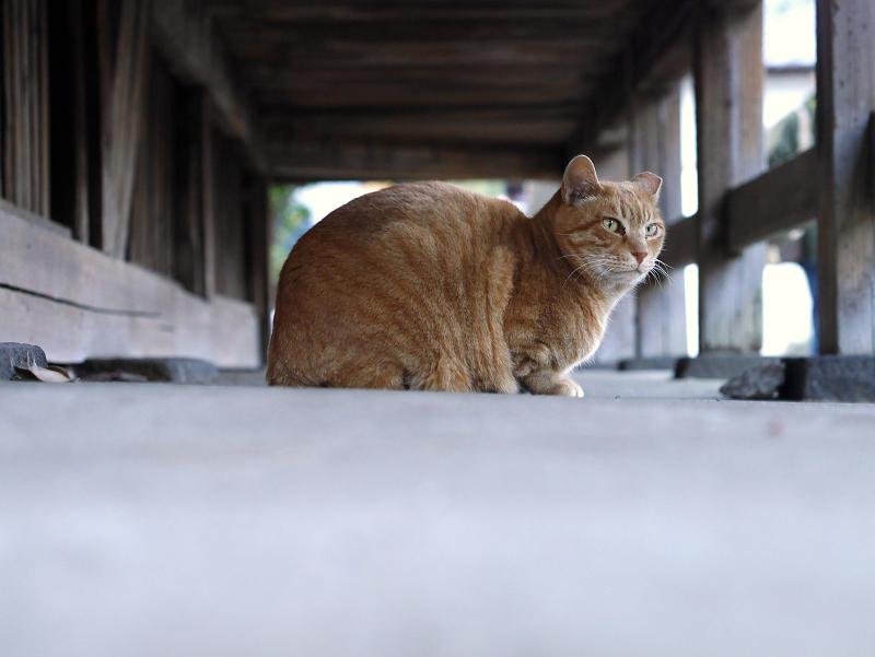 濡れ縁でカメラ目線の黒白猫2