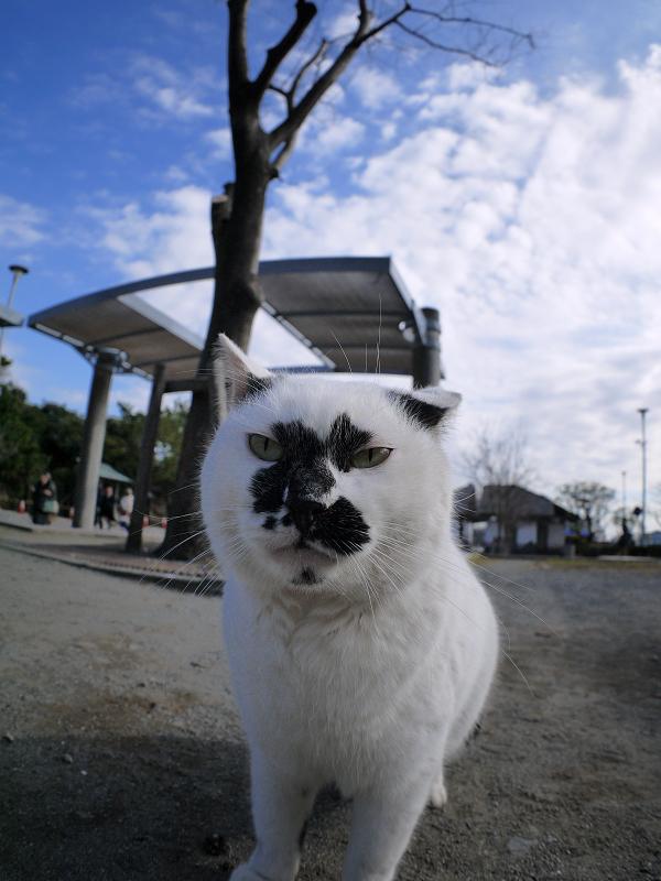 魚眼レンズに近づく白ブチ猫1