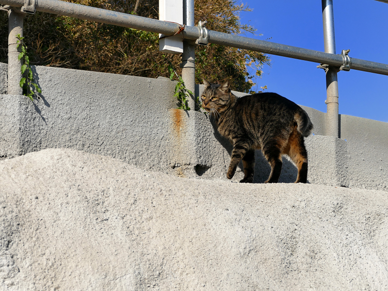 母猫の攻撃から逃げた娘猫1