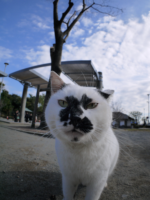 魚眼レンズに近づく白ブチ猫2