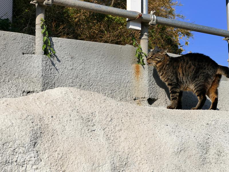 母猫の攻撃から逃げた娘猫2