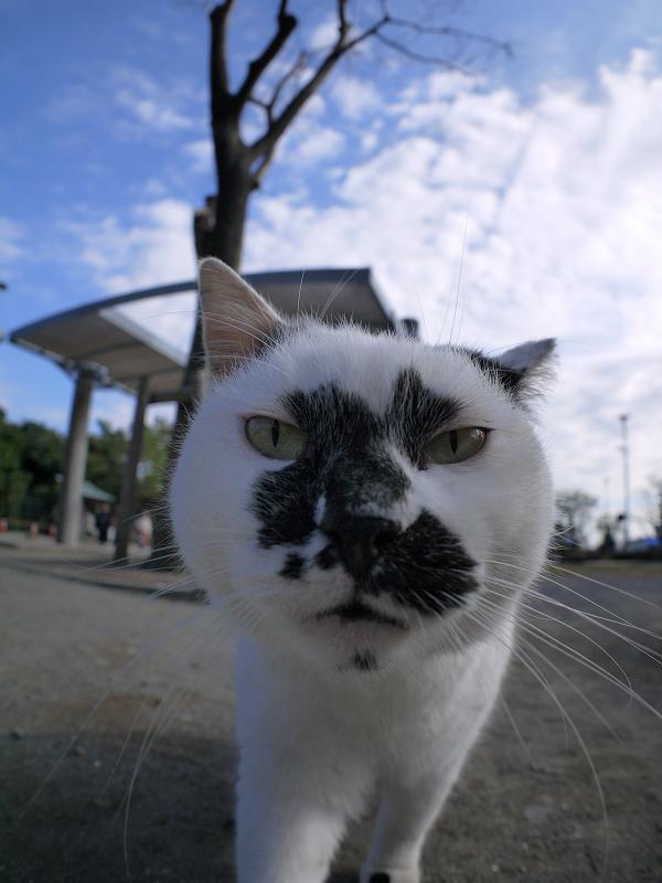 魚眼レンズに近づく白ブチ猫3
