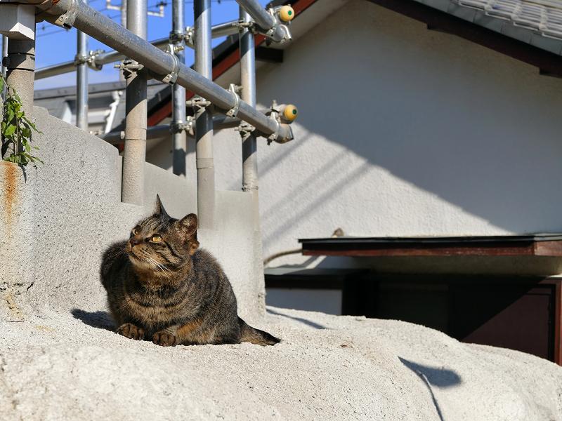 母猫の攻撃から逃げた娘猫3