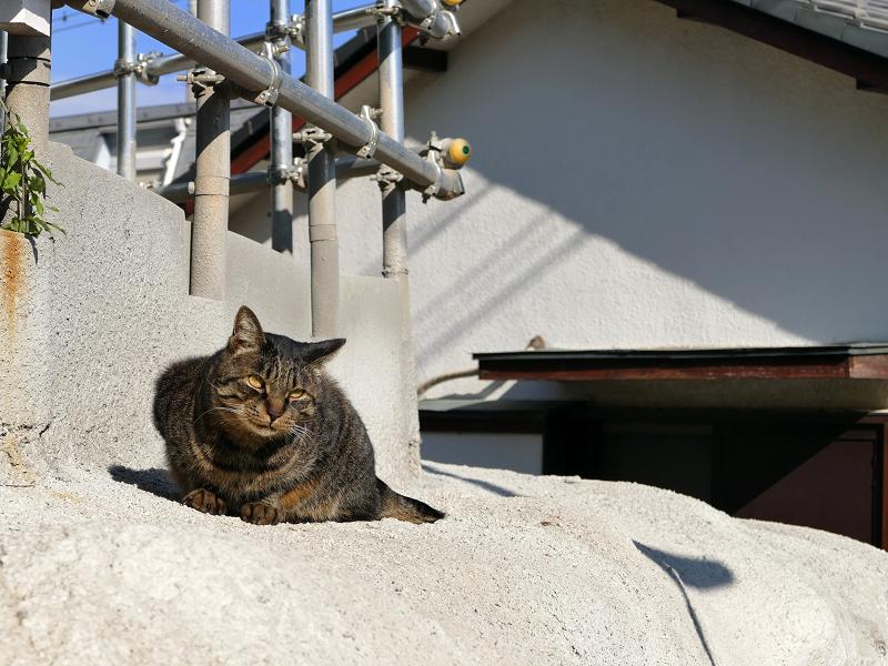 母猫の攻撃から逃げた娘猫5