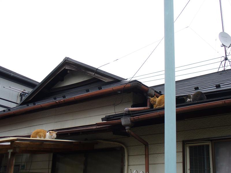 屋根上の3匹の猫たち
