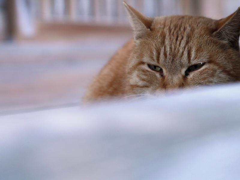 廻り縁の茶トラ猫2