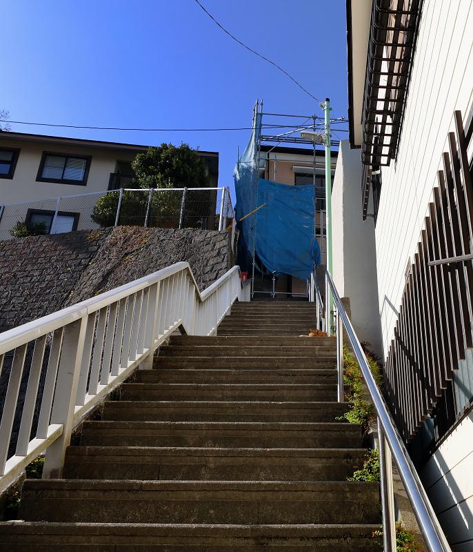 階段踊り場の茶トラ猫1