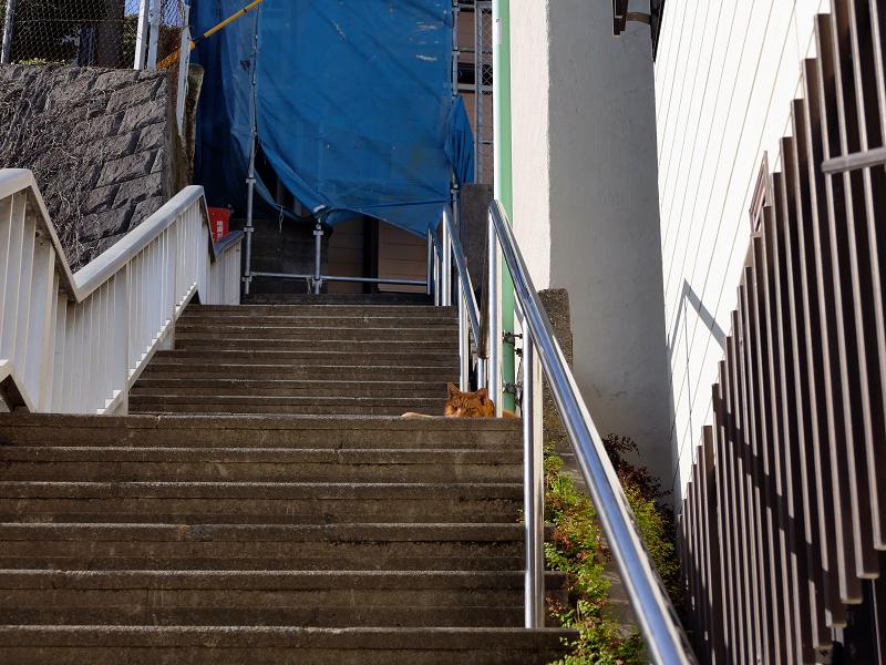 階段踊り場の茶トラ猫2