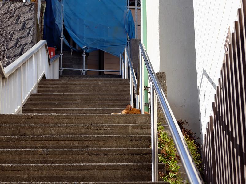 階段踊り場の茶トラ猫3