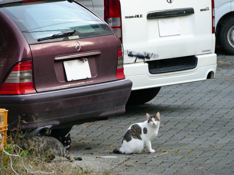ドローンと猫たち2