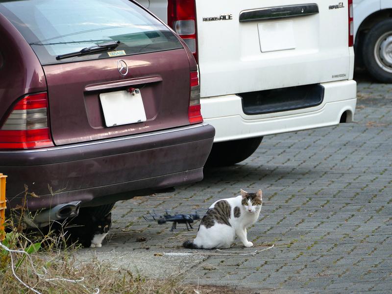 ドローンと猫たち3
