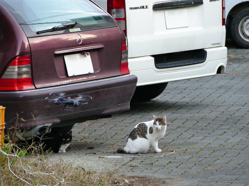 ドローンと猫たち4
