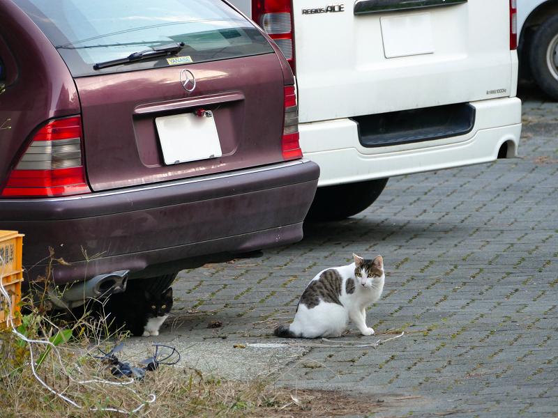 ドローンと猫たち05