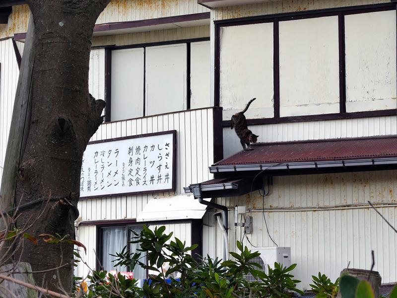 2階から出た来たキジトラ猫3