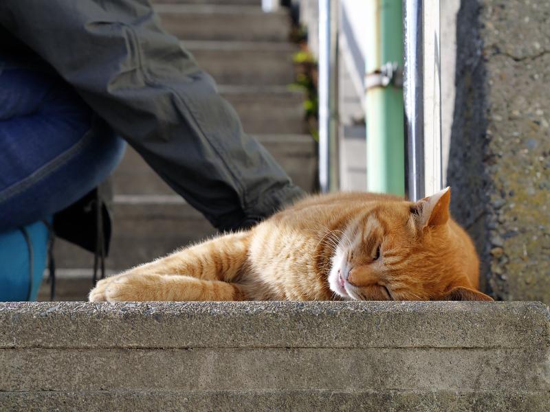 階段踊り場の茶トラ猫4