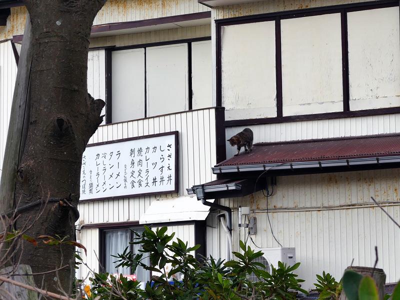2階から出た来たキジトラ猫4