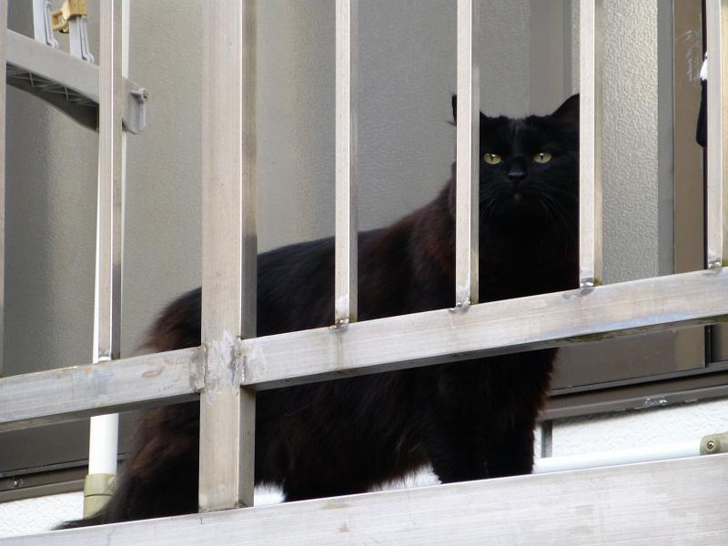 ベランダにいた黒猫2