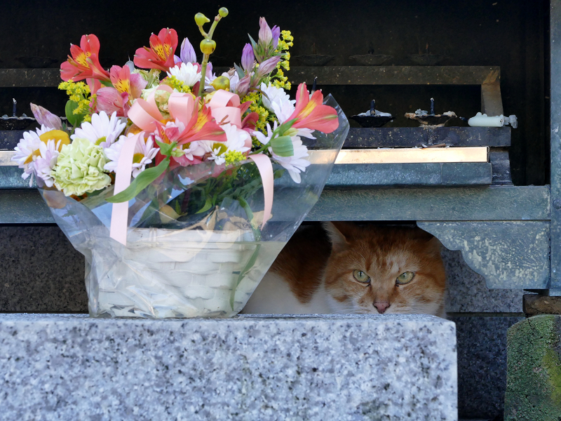 献花香台奥の茶白猫3