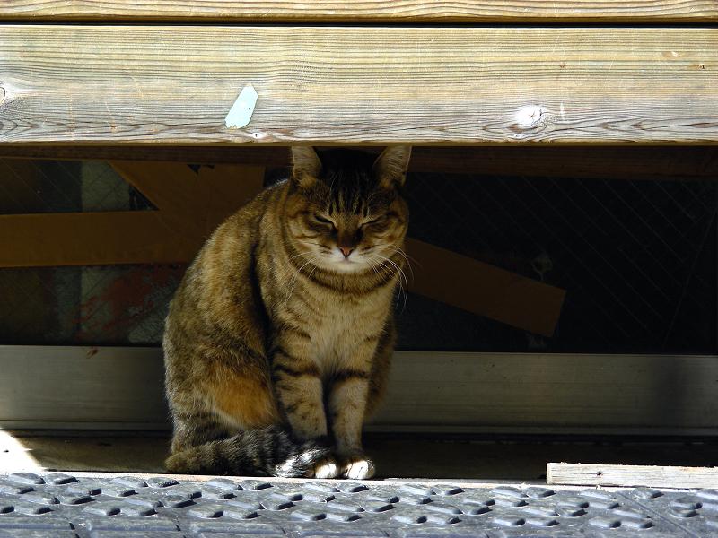 ベンチの下から睨むキジ白猫1