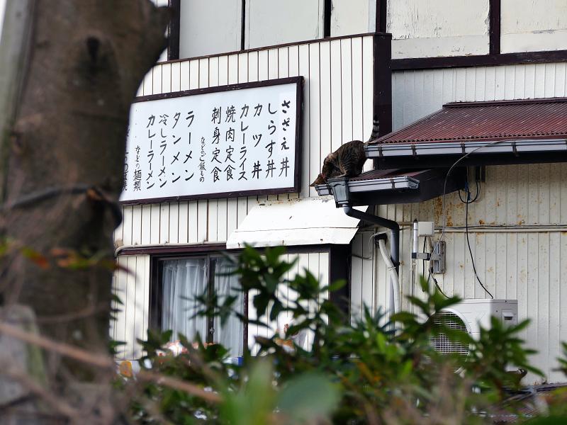 屋根から降りようとしてるキジトラ猫2